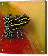 Phantasmal Poison Dart Frog Acrylic Print