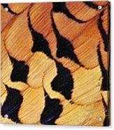 Pheasant Plumage Acrylic Print