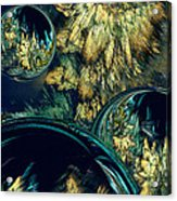 Phloral Activity  Acrylic Print