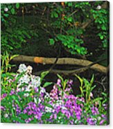 Phlox Along The Creek 7185 Acrylic Print