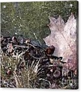 Photo Watercolour Leaf Against Rock Acrylic Print