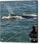 Photographer On Whale Watching Boat Acrylic Print