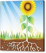 Photosynthesis, Artwork Acrylic Print