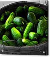 Pickling Cucumbers Acrylic Print by Ms Judi