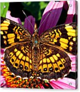 Picture Perfect    Butterfly 003 Acrylic Print