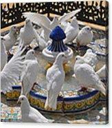 Pigeons Of Maria Luisa Parque Acrylic Print