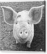 Piglet Acrylic Print