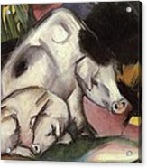 Pigs Acrylic Print by Franz Marc