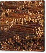 Pile Of Logs, Peeled And Ready Acrylic Print