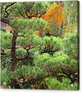 Pine And Autumn Colors In A Japanese Garden II Acrylic Print