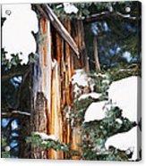 Pine Bark Acrylic Print by Lisa  Spencer