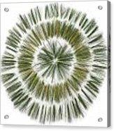 Pine Needle Flower Acrylic Print by David Esslemont