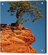 Pine On Rock Acrylic Print