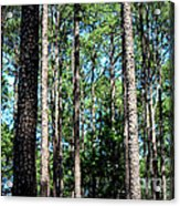 Pine Patch Acrylic Print