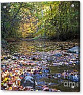 Pine River In Fall Acrylic Print