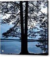Pine Silhuette Acrylic Print