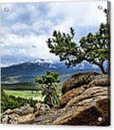 Pine Tree And Mountains Acrylic Print