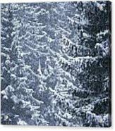 Pine Trees Covered In Snow, Les Arcs Acrylic Print