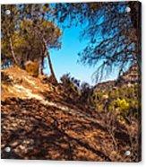 Pine Trees In El Chorro. Spain Acrylic Print