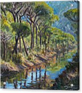 Pine Wood Reflections Acrylic Print