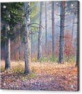 Pinewoods Acrylic Print