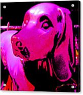 Pink And Purple Pooch Acrylic Print
