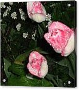 Pink And White Tulips In The Rain Acrylic Print