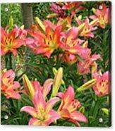 Pink And Yellow Daylilies Acrylic Print