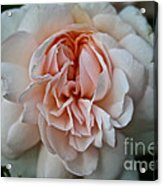 Pink Angel Acrylic Print
