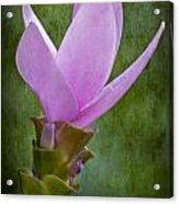 Pink Blossom Acrylic Print by Susan Candelario
