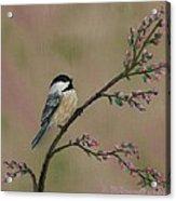 Pink Bud Chickadees - Bird 1 Acrylic Print
