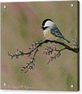 Pink Bud Chickadees - Bird 2 Acrylic Print