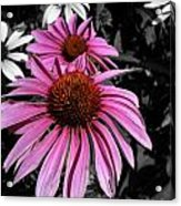 Pink Cutout Acrylic Print