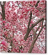 Pink Everywhere Acrylic Print by Becky Lodes