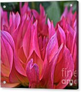 Pink Flames Acrylic Print