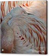 Pink Flamingo 7 Acrylic Print