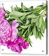 Pink Floral Summer Acrylic Print