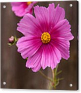 Pink Flowers And Wood  Acrylic Print