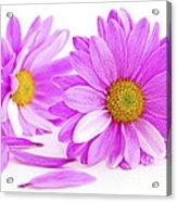 Pink Flowers Acrylic Print by Elena Elisseeva