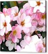 Pink Flowers With Bee Acrylic Print