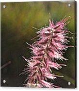 Pink Fuzzy Acrylic Print