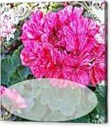 Pink Geranium Greeting Card Blank Acrylic Print