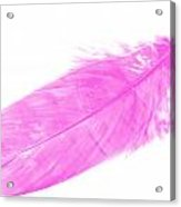 Pink Goose Acrylic Print