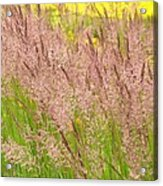 Pink Grass Acrylic Print
