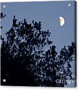 Pink Half Moon Photograph Acrylic Print