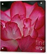 Pink Ice Acrylic Print