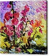 Pink Lavatera Acrylic Print