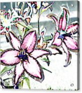 Pink Lilies Acrylic Print