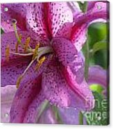 Pink Lily After The Rain Acrylic Print
