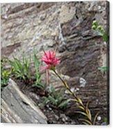 Pink Mountain Flower Acrylic Print